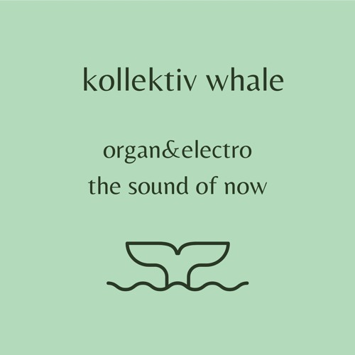 kollektiv whale's avatar