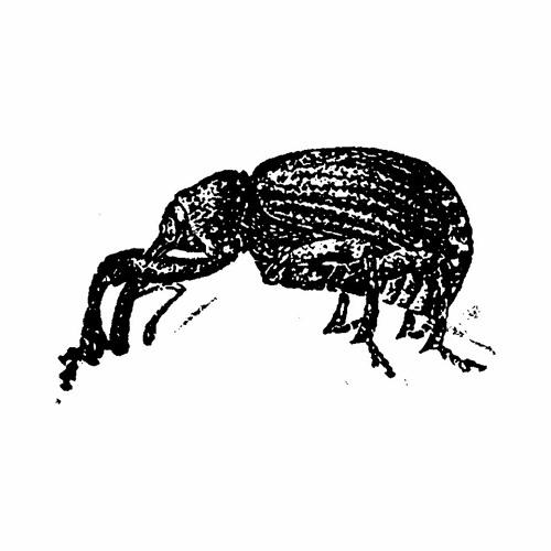 The Weevil Neighbourhood's avatar