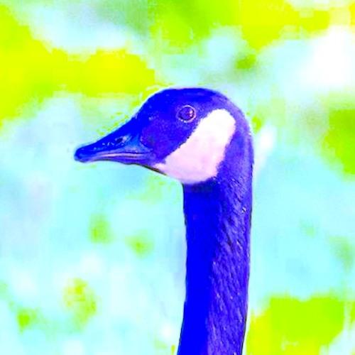 choroplethora's avatar