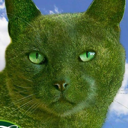 The Topiary Cat's avatar