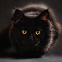 Little Black 小黑