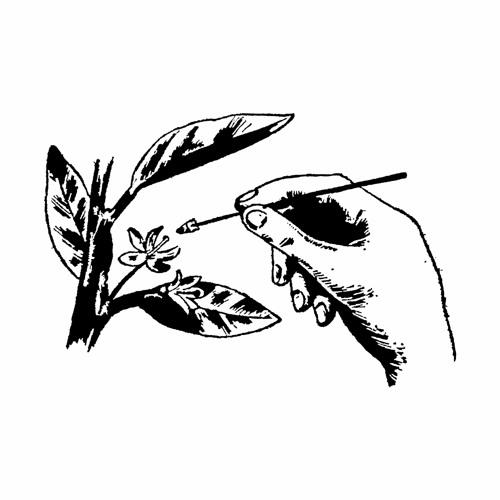 Eastern Nurseries's avatar