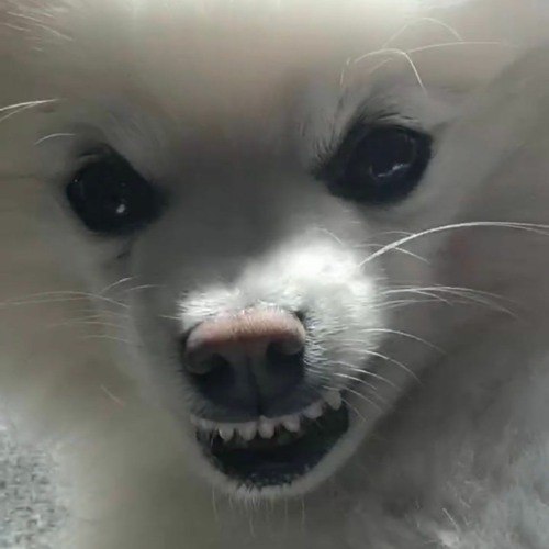 lil hank's avatar
