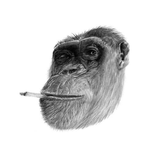 Senga´s Choice's avatar
