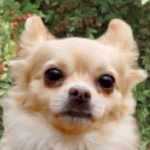 loveshack's avatar