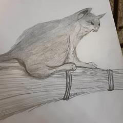 Catpadwick