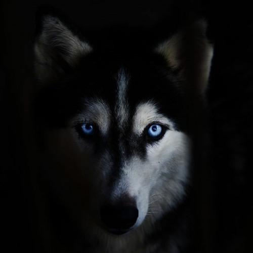 DarkForest Mix's avatar
