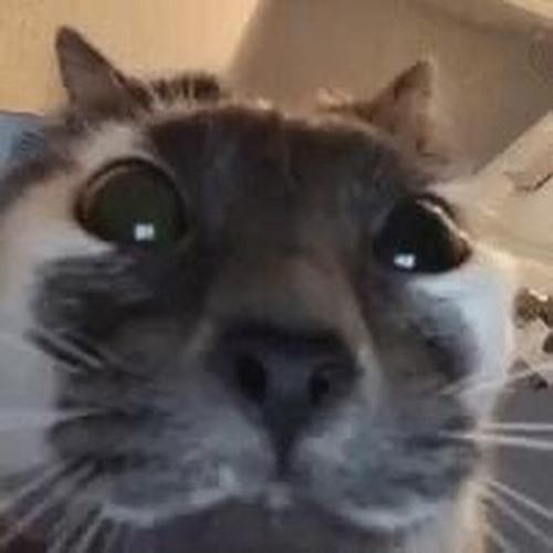 Vruci cat