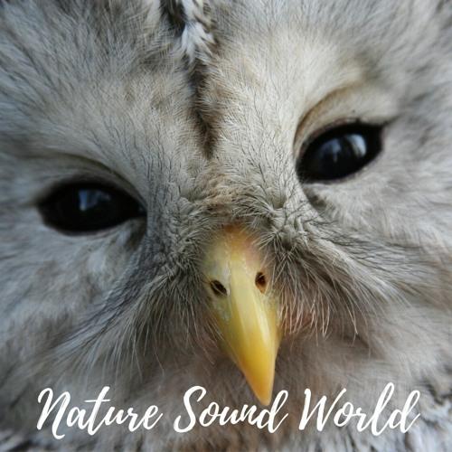 Nature Sound World's avatar