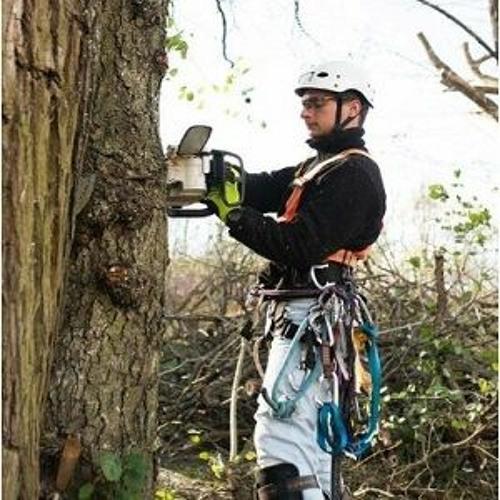 Tree Service Stamford's avatar