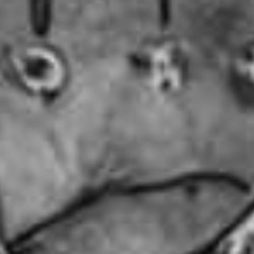 Wax JawBee's avatar