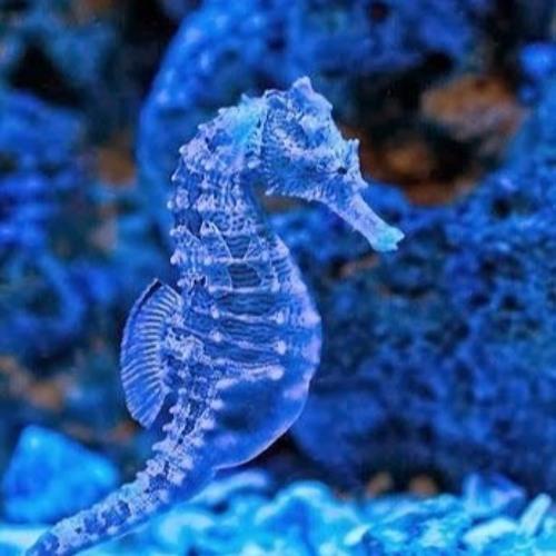 spirale bleutée