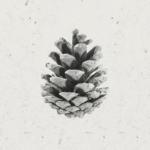 Saisons's avatar