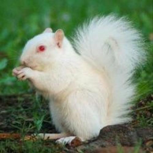 albinoSQUIRREL's avatar