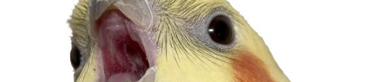 Moist Owlets