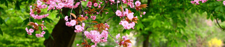 Lagu Ost Gu Family Book Spring Rain
