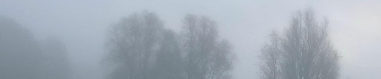 The Storm Petrels