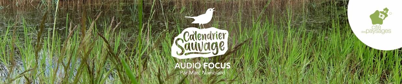 Audio Focus